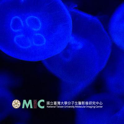 台大分子影像醫學資料庫